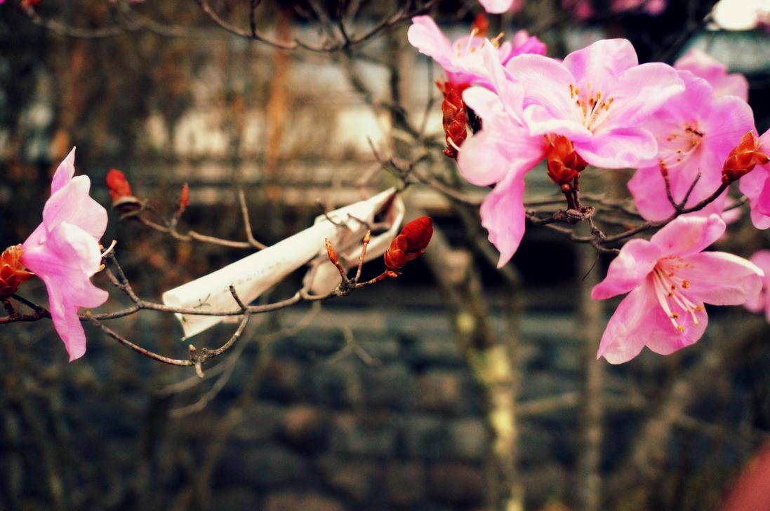 Nikko Shrine Sakura by MikeyMono