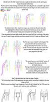 Tails on Humanoids Tutorial/Studies
