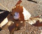 Mini Totoro on a leaf