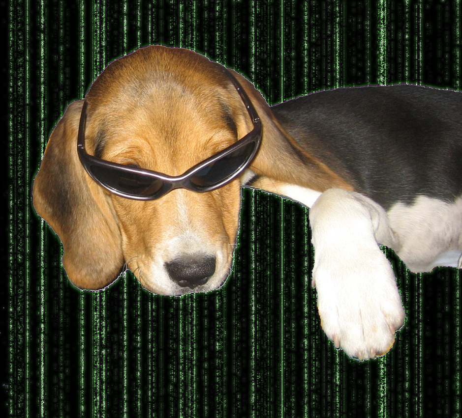 [Image: Matrix_Dog_2_by_EroAxel.png]