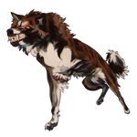 Tigerstar but dog