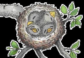 Bluebird nest by ibnelson