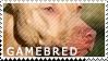 Gamebred Stamp by SkogarKennel