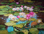 Dragon-fly on water-lilys