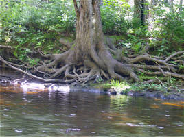Mystical Waters by L-L-arts