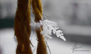 Winter... by VnOrBeRt