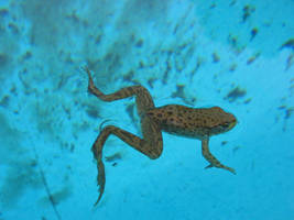 froggy 3 by Exor-stock