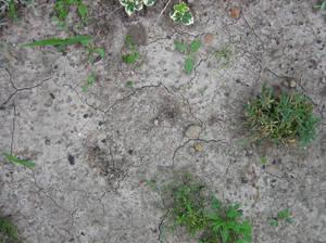 cracked garden