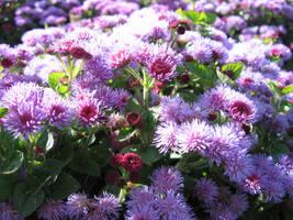 Purple Flowers by Exor-stock