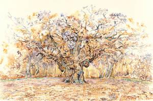 Golden Major Oak by ForestEdgeFineArt