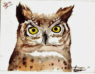 Confused Owl by Razum22