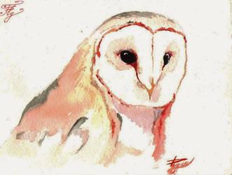 Peaceful North Owl by Razum22