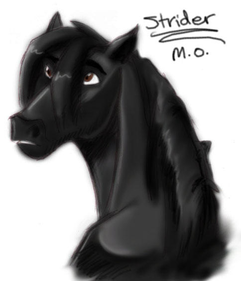 Fan Club de Strider Strider_as_a_stallion