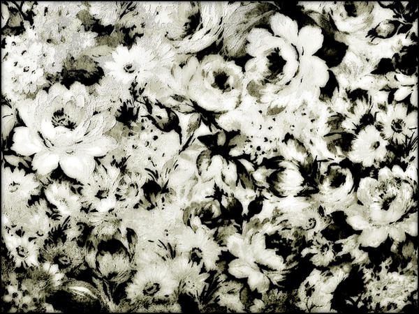 rose texture by solis-sacredotibus