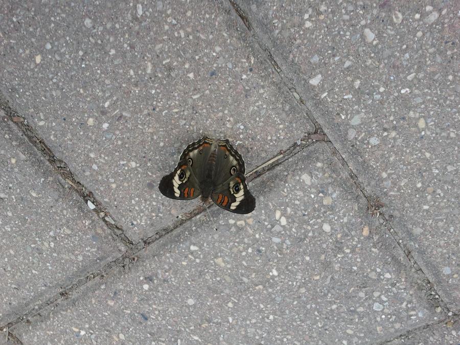 Butterfly 10 by juliet12183