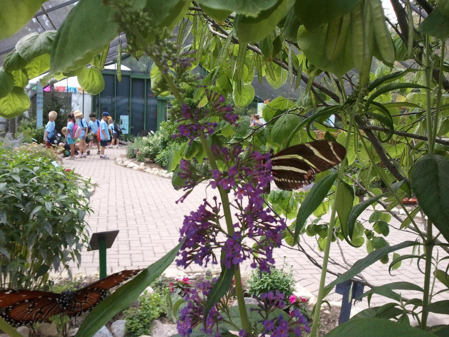 Butterfly 11 by juliet12183