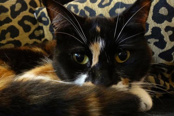 Lulu Watching by JenniferCulverhouse
