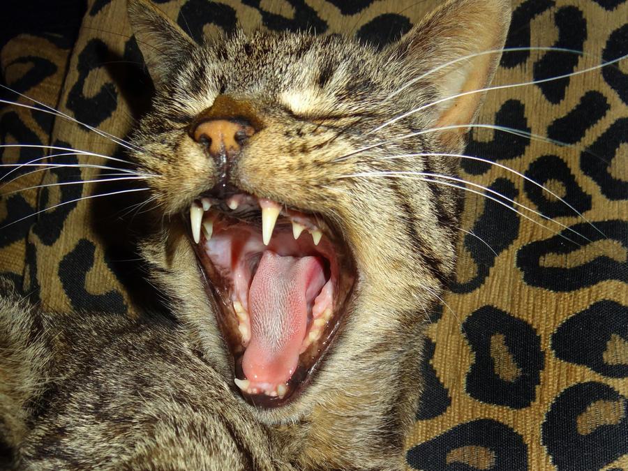 Pepsi Yawn by JenniferCulverhouse