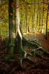 an old tree secret