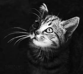 feline magic by paintmewet