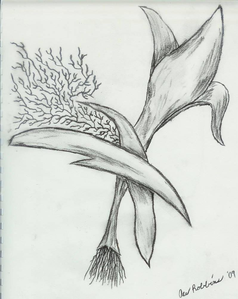 Carbon sketch 5 by acerobbins on deviantart