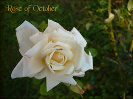 Rose of October