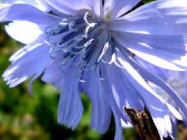 little flower leave your den by gwinnya