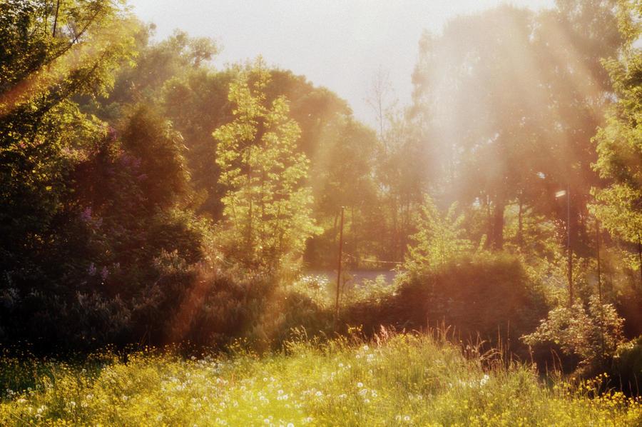 Beautiful Spring by samsibamsi