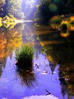 nature by lauren77