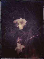 A phantasie of love by rickster155