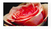 Rose Stamp by Millyp123