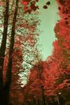 cinema albero