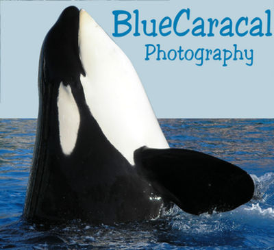 BlueCaracal's Profile Picture