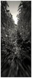 - unreachable serenity - by ArtOfInsaneMinds
