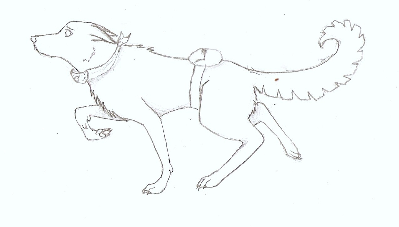 Hinata Wolf by Baby-Cougar on DeviantArt