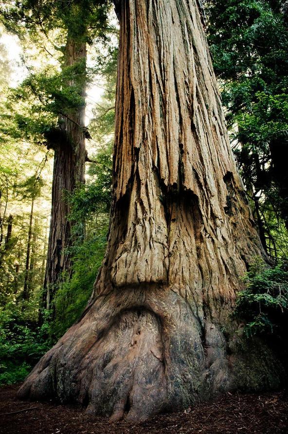 The Great Deku Tree by mattleese87