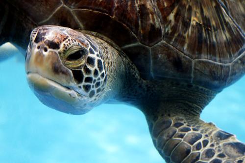 Sea Turtle by BrokenFayth
