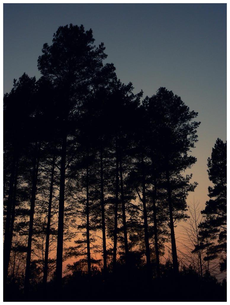 A Start Of The Night by MinoriBakusa