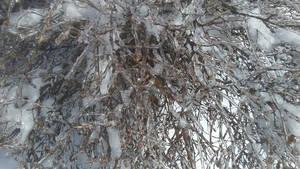 more frozen maine 2
