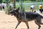 german shepherd dog 10