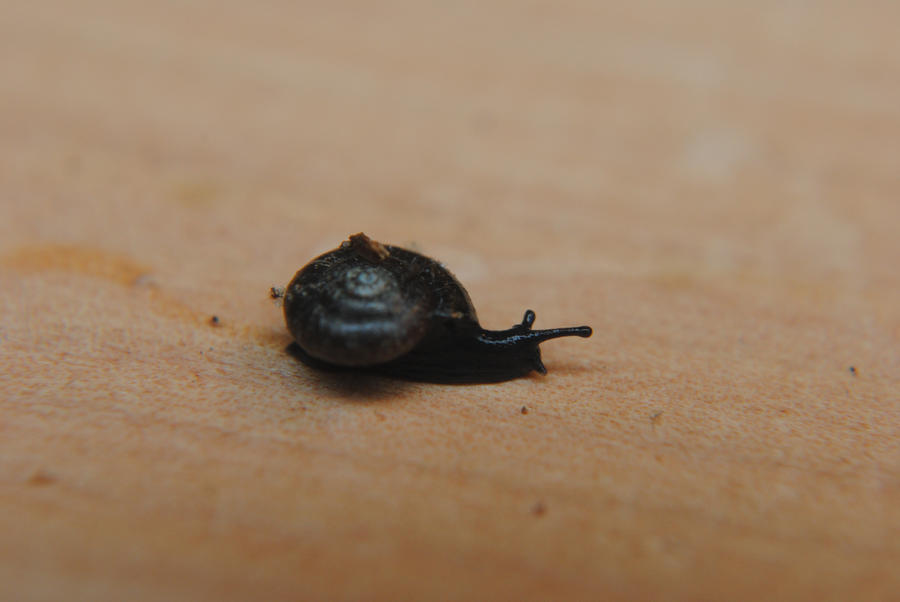 How to Get Rid of Slugs and Snails With Yeast pictures