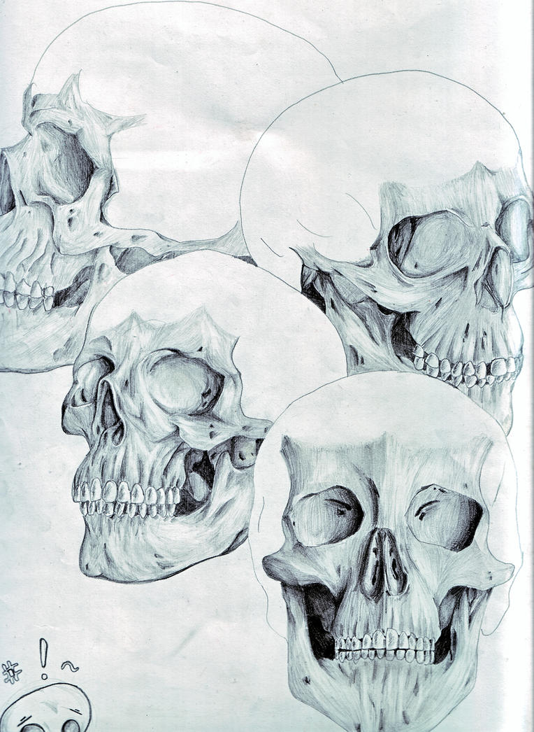 Practicing Skull Anatomy by AlleyCat-ZD on DeviantArt