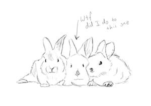 Bunny trace UvU