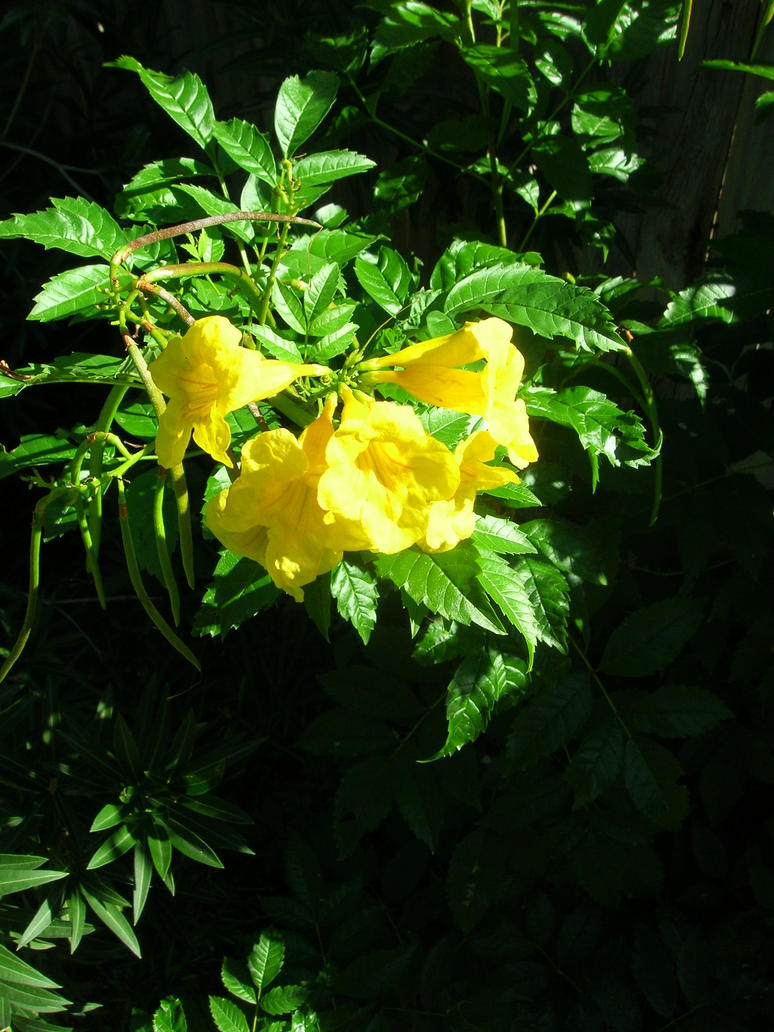 Yellow Flower In The Texas Sun By Darknighteyes On Deviantart
