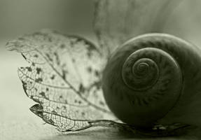 Shell by bwoman2008