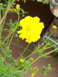 flower by lolaranca