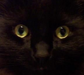 Kya-Kyabetsu's Profile Picture