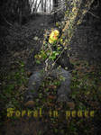 F.I.P. : Forest in Peace