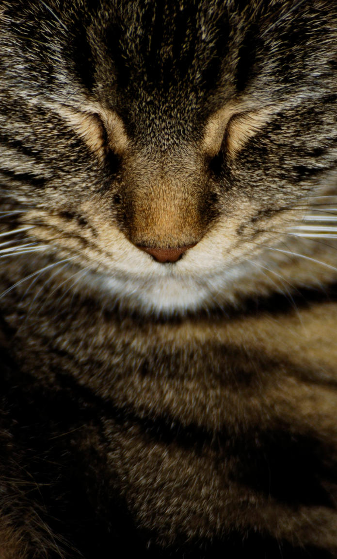 Cat face by in-my-viewfinder