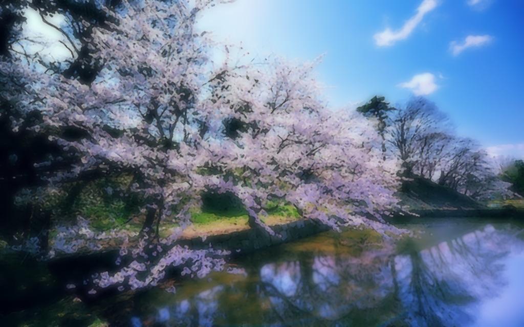 Sakura Oil Painting by YueShirosaki